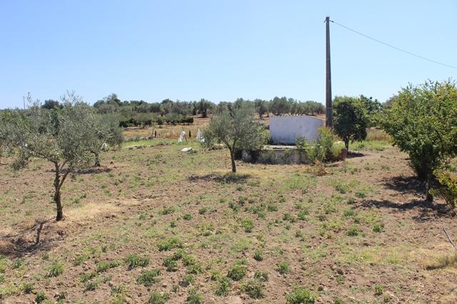 AGR1867 03 land