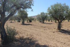 AGR1867 05 land