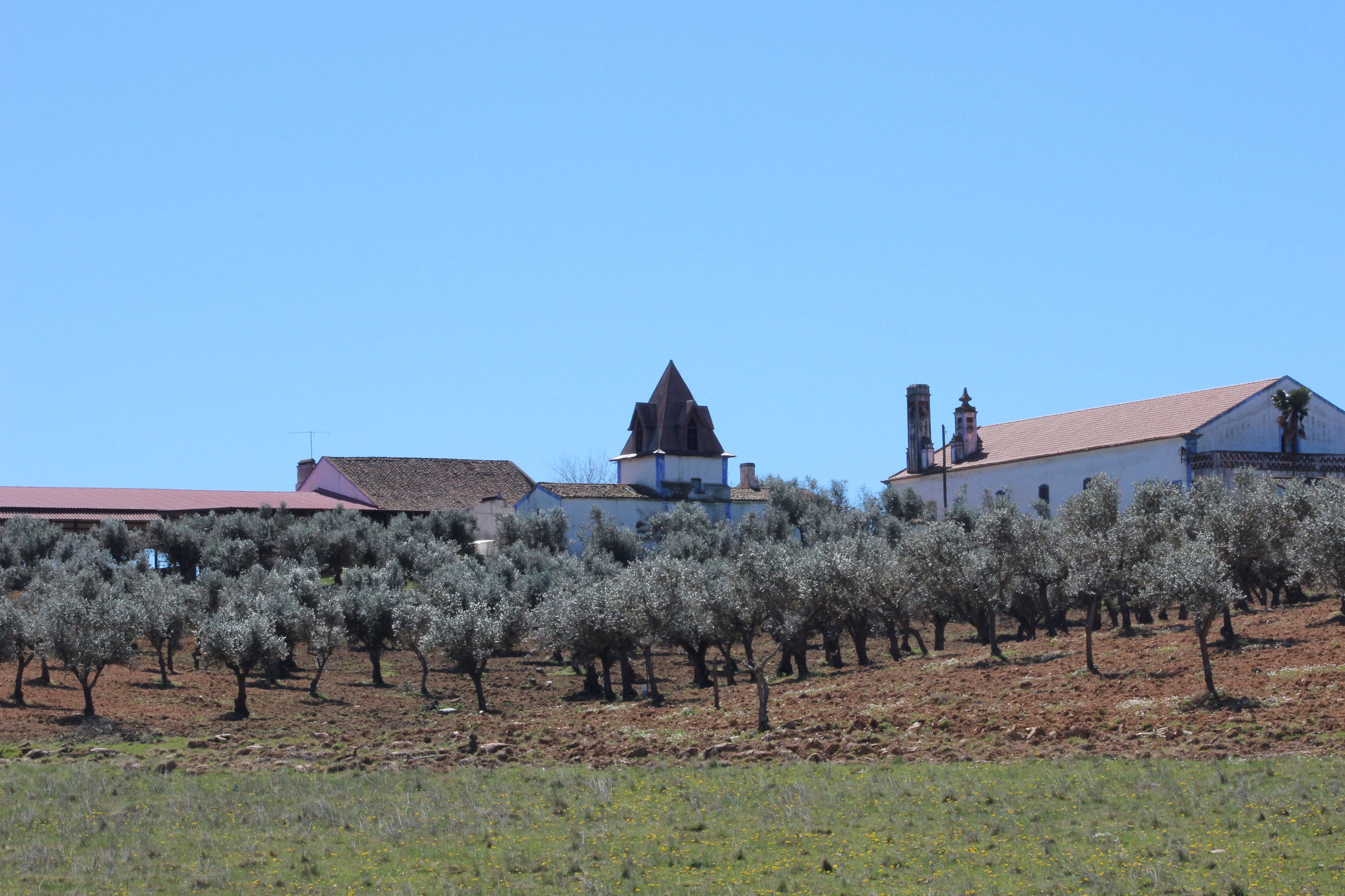 Farm, Olive Grove, Cork Oaks, Cattle & Manor House