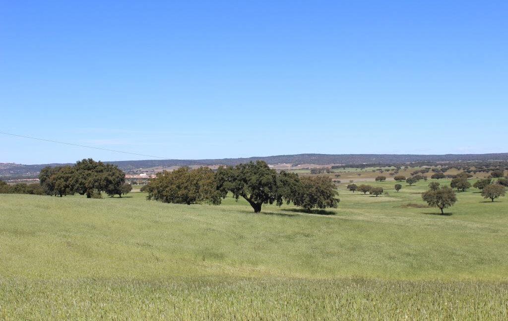 AGR1912 13 land view