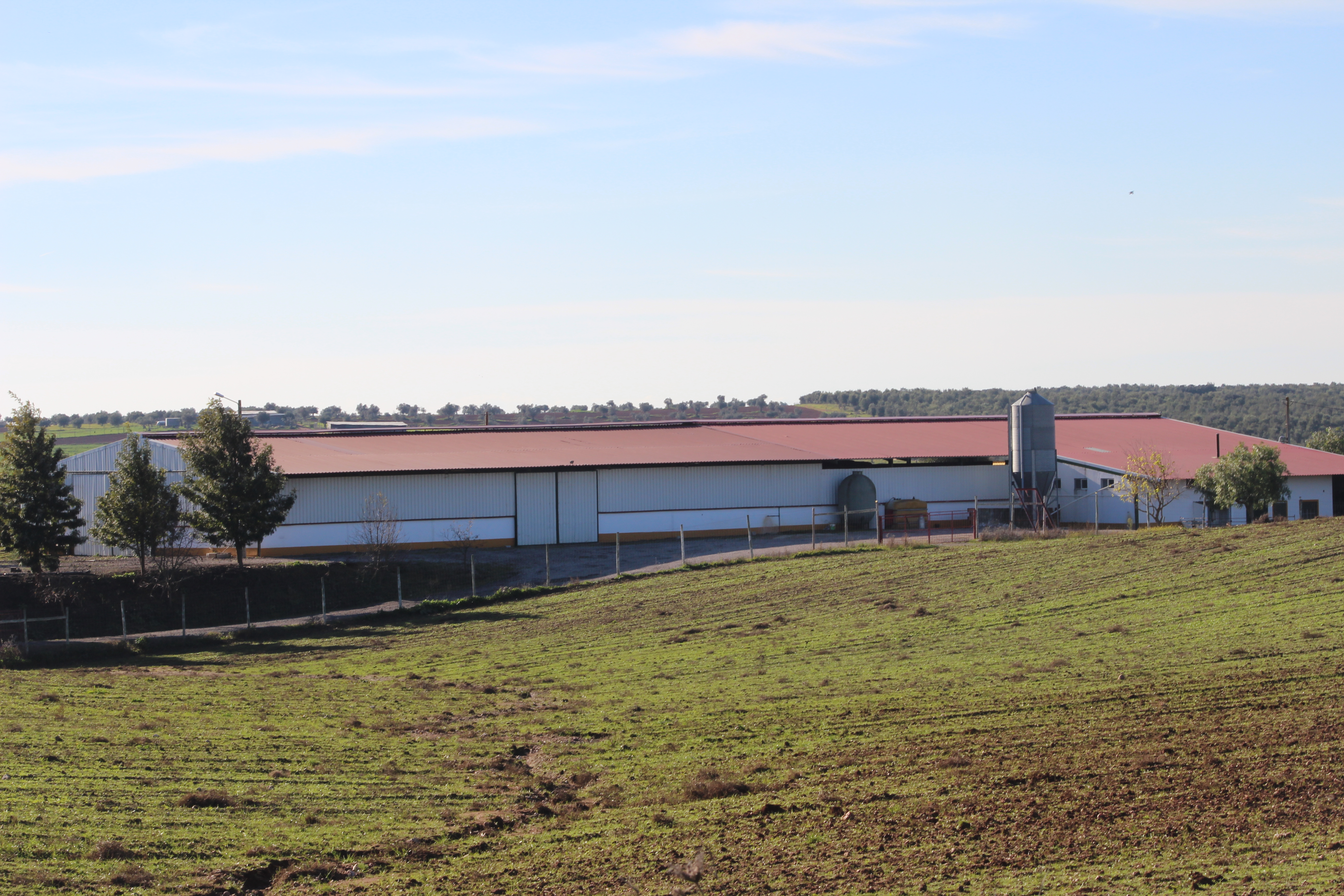 Farm with Dairy, Hay Store & Stable