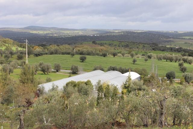 Garden centre and nursery garden near Near Vidigueira