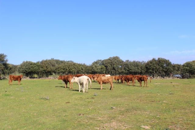 Herd 0102