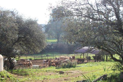 Herd 0139