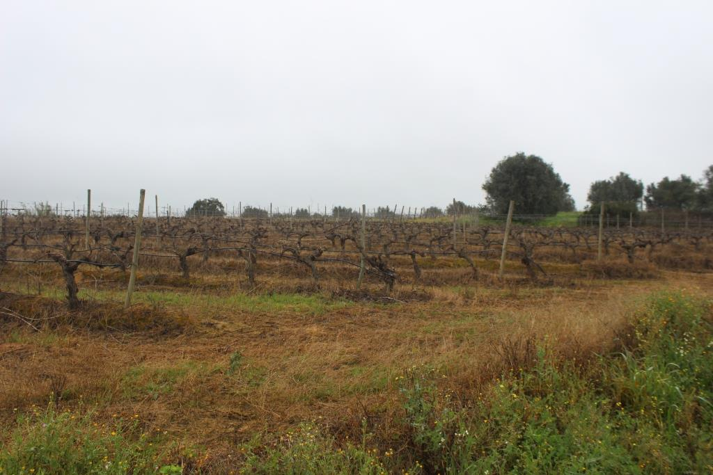 A very good vineyard with good irrigation, 30.000 m²