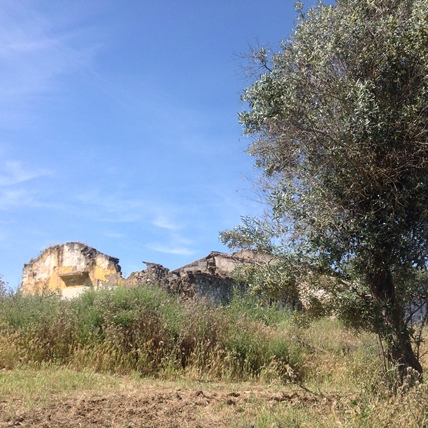 A large flat plot with a ruin and a shed near Beja, Alentejo.