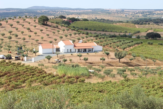 Villa  in Vidigueira – A beautiful renovated 3-bedroom house with wine adega, shed and 2- bedroom apartment.